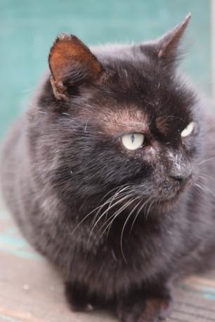 Black tomcat 3