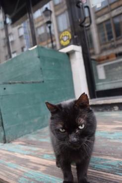 Black tomcat 4