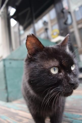 Black tomcat 5