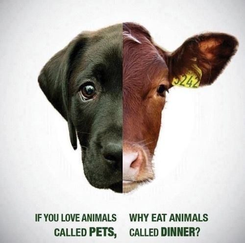 don't eat meat