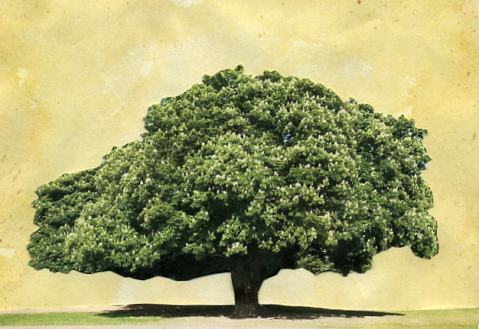 Painting of an old chestnut tree