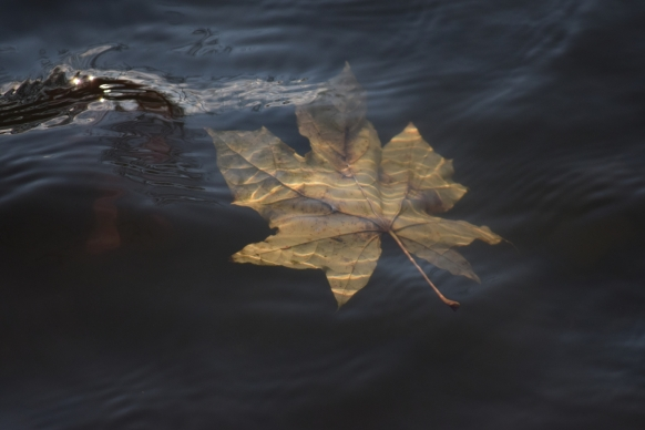 water leaf underwater autumnn yellow fall