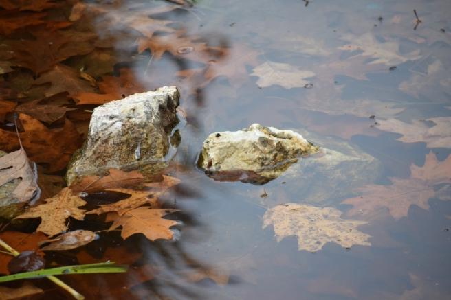 Leaves water autumn fall rocks