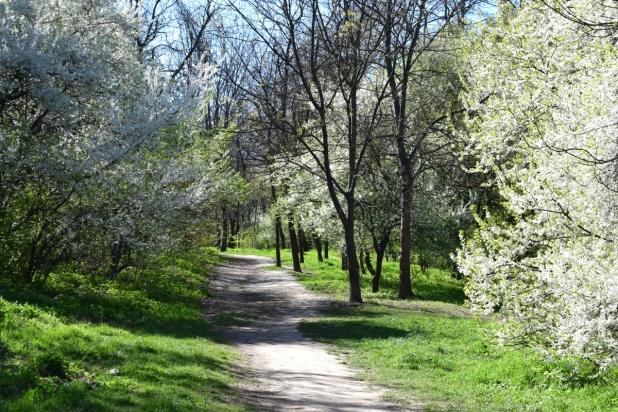 walking path spring green bucharest herastrau
