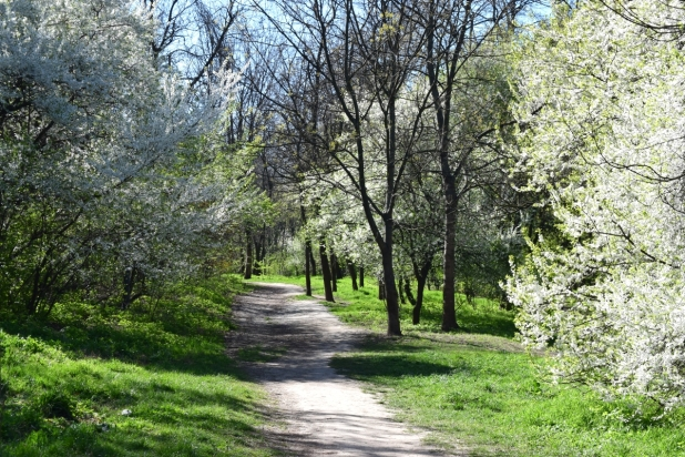 walking path spring green bucharest herastrau