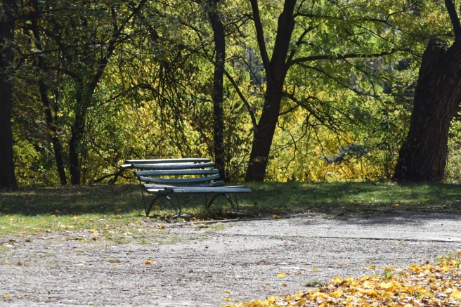 Park Bench in Herastrau