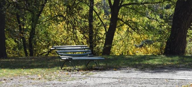 Park Bench in Herastrau