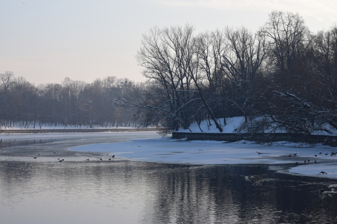 Lacul Herastrau Topindu-se - Frozen Lake with Trees