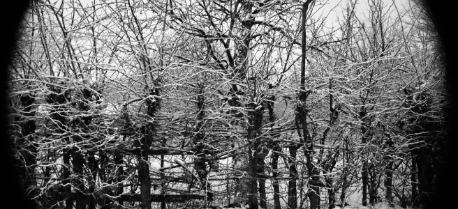 wall of bare trees, branches, and twitchs in winter landscape