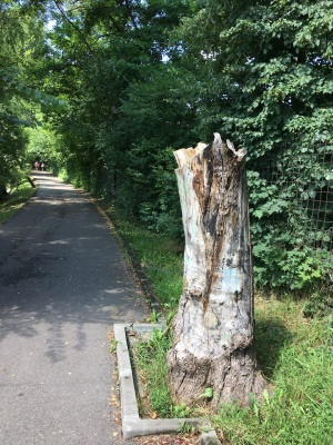 Tree trunk cut on park alley