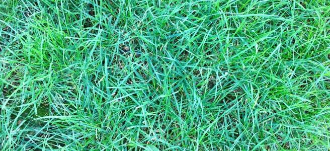 summer grass closeup from above