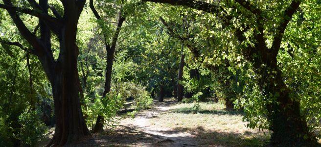 path between trees herastrau park
