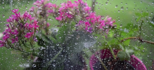 raindrops on the windowpane with pink flowers in pots in the background and grass
